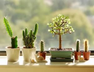 bring-the-garden-inside