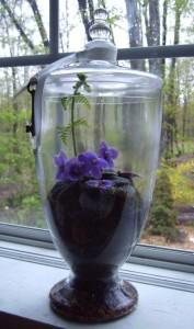 Violets on a Moss