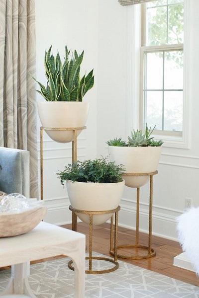 indoor plants according to concept interior ideas
