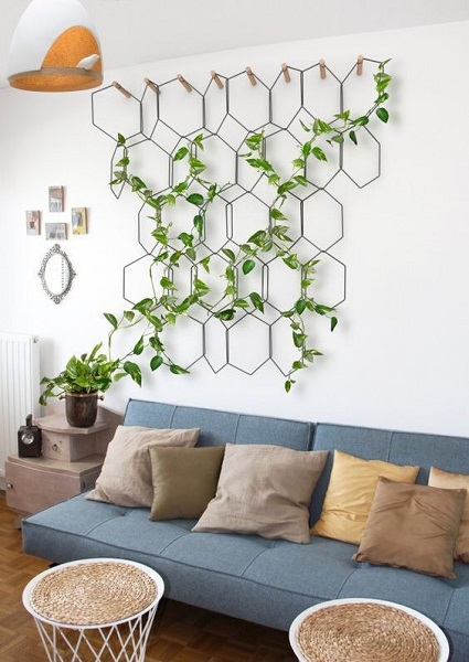 indoor plant for home decor